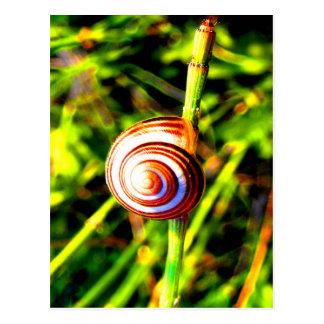 Hug the beauty and love Gastropoda Postcard