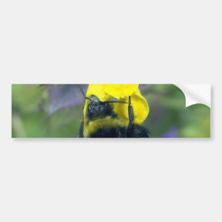 Huge Bumblebee On The Flower Bumper Stickers
