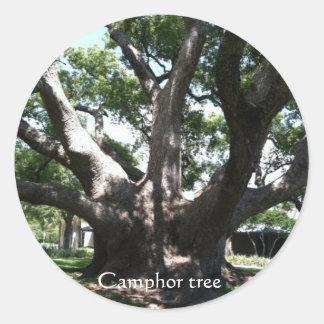 Huge camphor tree photo by bbillips classic round sticker