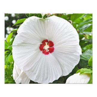 Huge Flower Art Photo