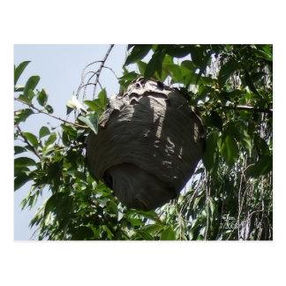 Huge Hornet Bee Hive Nestled in Tree Postcard