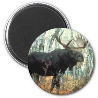 Huge Moose 2 Inch Round Magnet