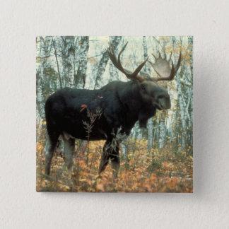 Huge Moose Button