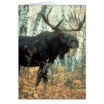 Huge Moose Card