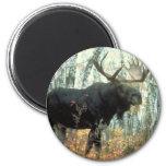 Huge Moose Fridge Magnets