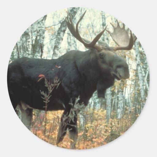 Huge Moose Stickers