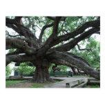 HUGE Oak Tree Jacksonville Florida Postcards