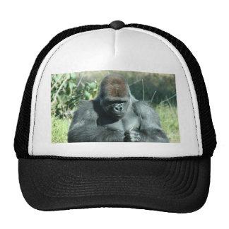 Huge Silver Back Gorilla Hats