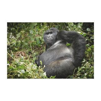 huge silverback mountain gorilla canvas print
