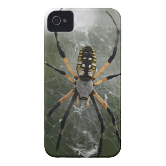 Huge Spider / Yellow & Black Argiope Case-Mate iPhone 4 Case