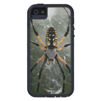 Huge Spider / Yellow & Black Argiope iPhone SE/5/5s Case