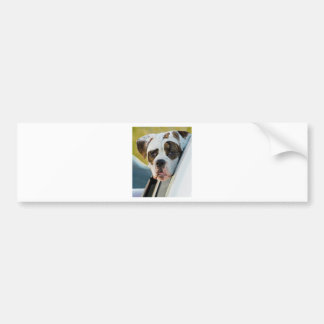 Huge Spotted Dog Looking Out Car Window Bumper Sticker