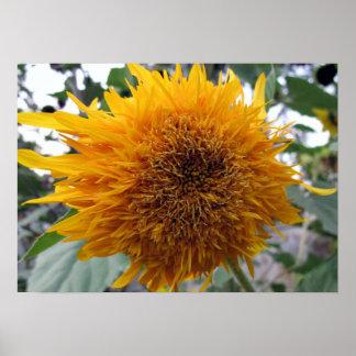 Huggable Sunflower Poster