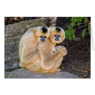 Hugging Buff Cheeked Gibbons Card