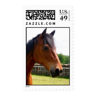 Hugo el caballo sello