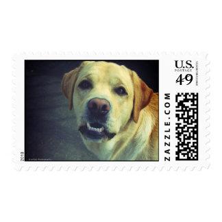 Huh?! - Goofy Labrador Postage Stamp