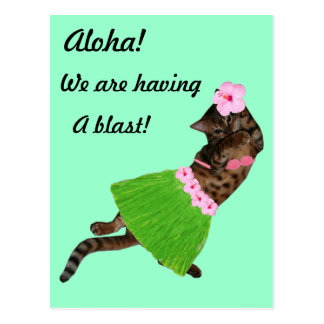 Hula Aloha Cat Postcard