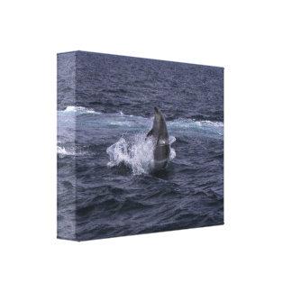 Hula-hoop Bottlenose Dolphin - canvas print