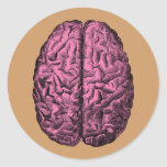 Human Anatomy Brain Sticker