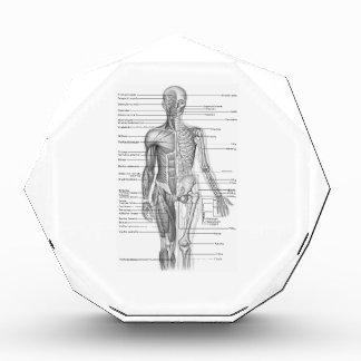 Human Anatomy Chart Acrylic Award