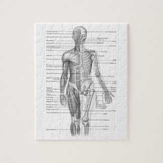 human skeleton jigsaw puzzles | zazzle, Skeleton
