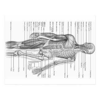 Human Anatomy Chart Postcard