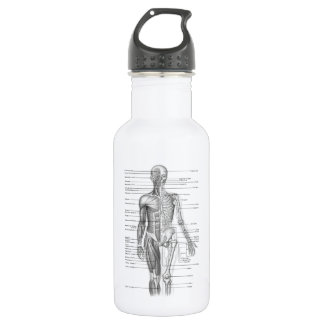 Human Anatomy Chart Stainless Steel Water Bottle