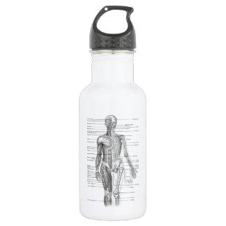 Human Anatomy Chart Stainless Steel Water Bottle