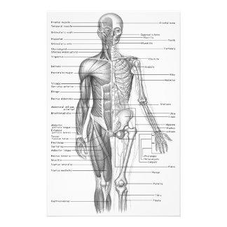 Human Anatomy Chart Stationery