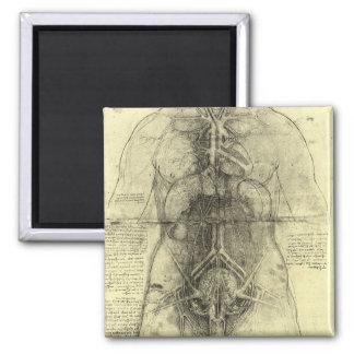 Human Anatomy, Female Torso by Leonardo da Vinci 2 Inch Square Magnet