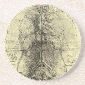 Human Anatomy, Female Torso by Leonardo da Vinci Drink Coaster
