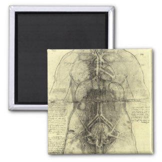 Human Anatomy, Female Torso by Leonardo da Vinci Magnet