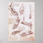 Human Anatomy Foot Skeleton Bones by da Vinci Poster