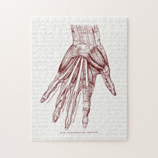 Human Anatomy Hand Muscles Red Jigsaw Puzzle | Zazzle.com