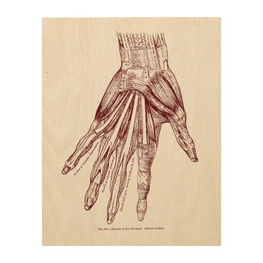 Human Anatomy Hand Muscles Red Wood Print | Zazzle.com