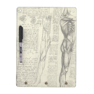 Human Anatomy Male Muscles by Leonardo da Vinci Dry Erase Board
