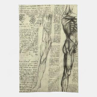 Human Anatomy Male Muscles by Leonardo da Vinci Kitchen Towel