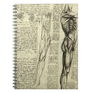 Human Anatomy Male Muscles by Leonardo da Vinci Notebook