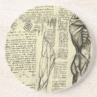Human Anatomy Male Muscles by Leonardo da Vinci Sandstone Coaster