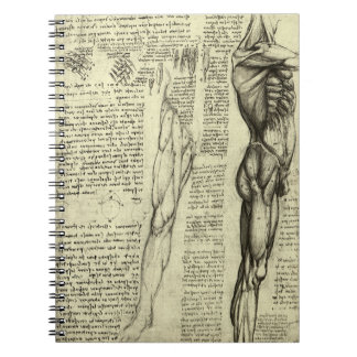 Human Anatomy Male Muscles by Leonardo da Vinci Spiral Notebook