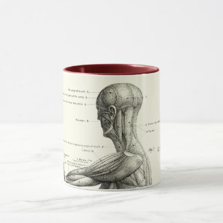 Human anatomy, muscles of the human body mug