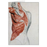 Human Anatomy; Muscles of the Torso and Shoulder Greeting Card