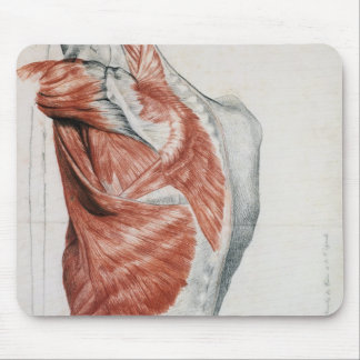 Human Anatomy; Muscles of the Torso and Shoulder Mouse Pad
