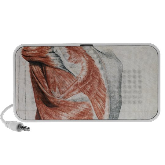 Human Anatomy; Muscles of the Torso and Shoulder Portable Speaker