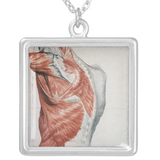 Human Anatomy; Muscles of the Torso and Shoulder Square Pendant Necklace