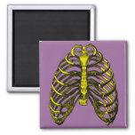 Human Anatomy Rib Cage 2 Inch Square Magnet