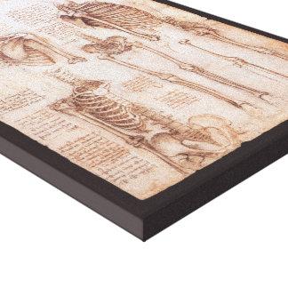 Human Anatomy Skeletons by Leondardo da Vinci Canvas Print