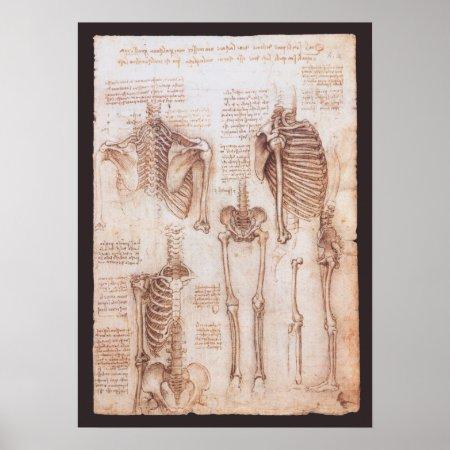 Human Anatomy Skeletons by Leondardo da Vinci