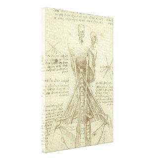 Human Anatomy Spinal Column by Leonardo da Vinci Stretched Canvas Prints