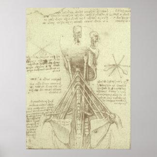 Human Anatomy Spinal Column by Leonardo da Vinci Poster